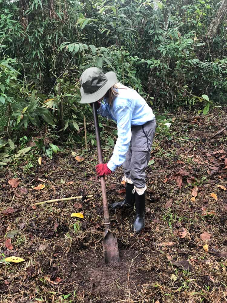 replanting the rainforest using a scoop tool to dig holes